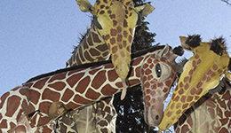 banner_Girafes_Xirriquiteula