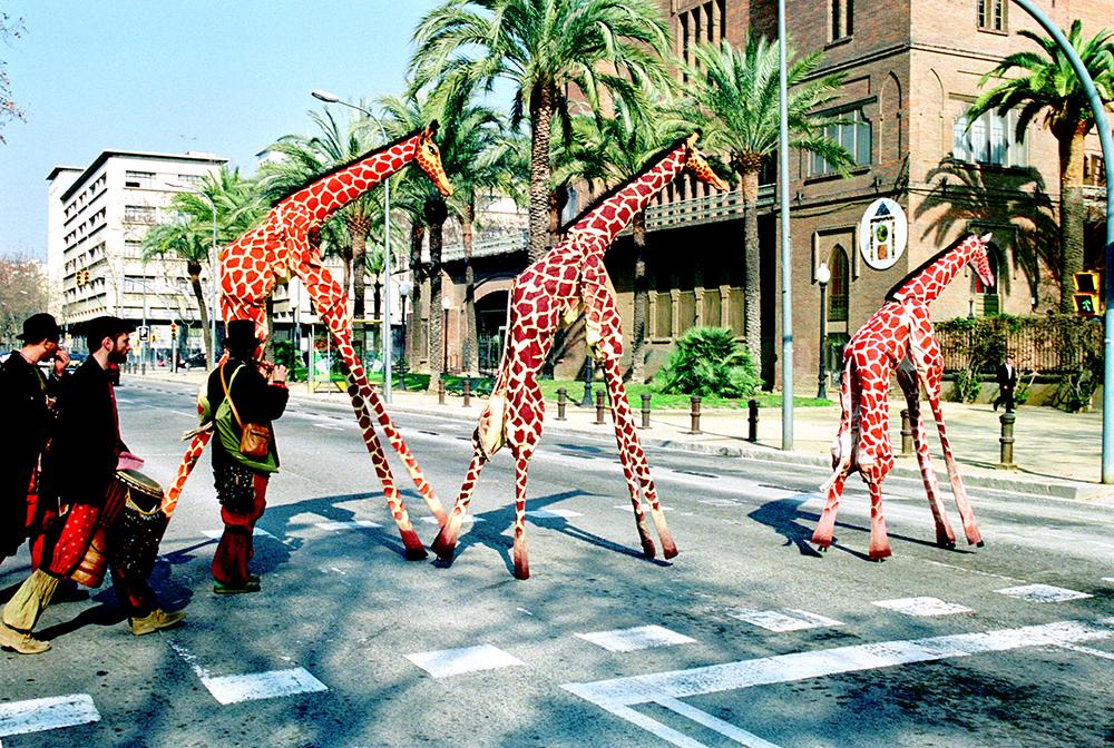 galeria_Girafes_Xirriquiteula06
